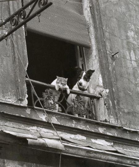 dog-cat-at window