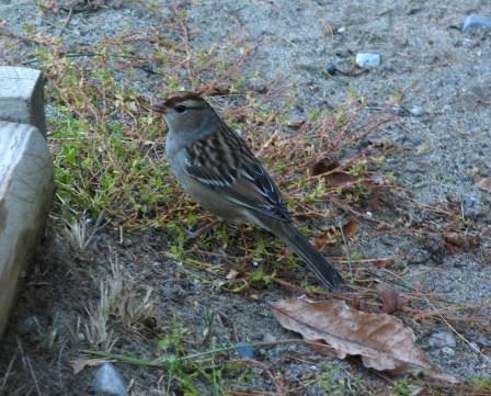 sparrow22